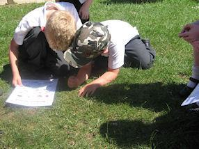 Observing the mini beasts carefully.