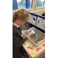 We like to look at the tadpoles everyday to see whether they have grown