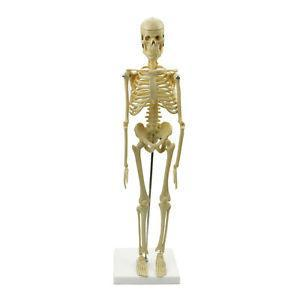 Our friend Skelly!