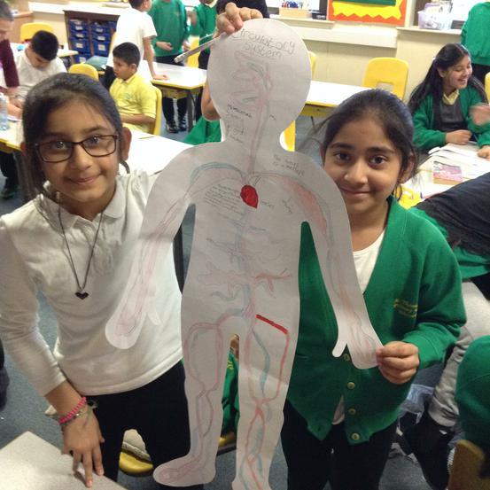 ...the circulatory system!