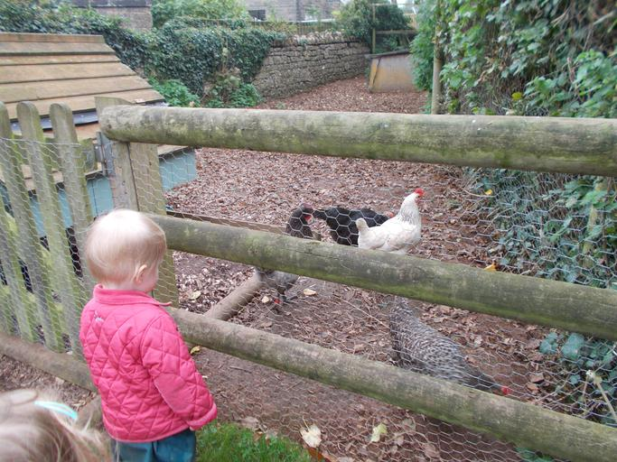 Visiting the nursery hens