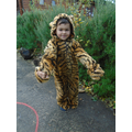 Have you seen these tigers?