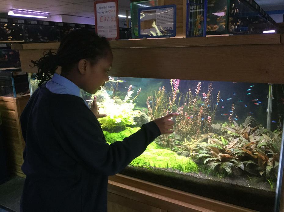 Dara choosing fish for the tank.