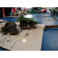 Reception creating a perfect habitat with mud