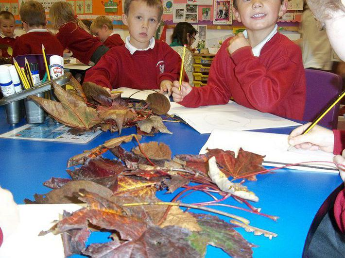 We collected leaves from the tree trail