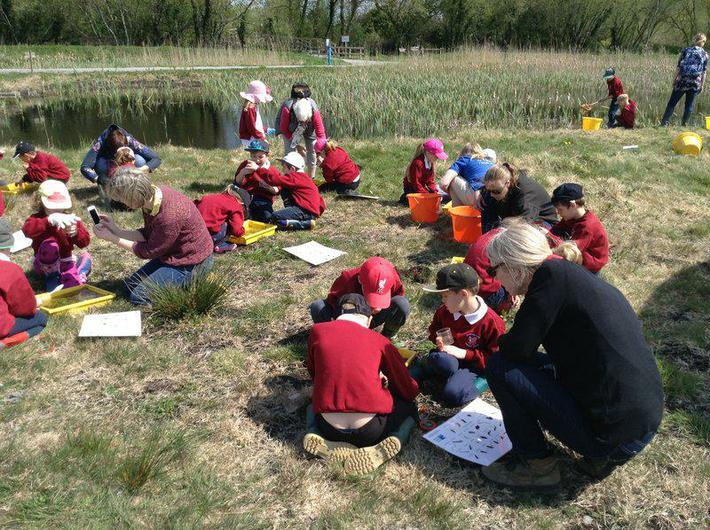 Pond dipping and identification