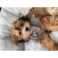 Harrison and Harley's beautiful dog Ralphy