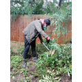 Chopping down bushes wearing correct Personal protective equipment
