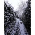 I (Hannah) stumbled across winter wonderland, with my dog...