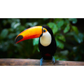 A toucan - they have a 20cm beak.