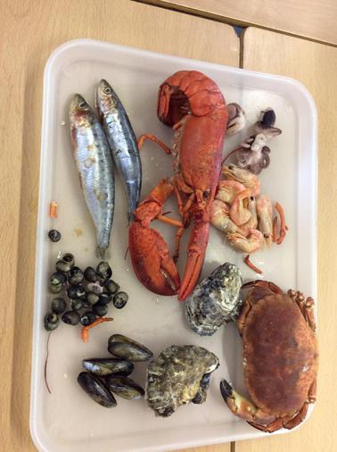 We had a tray of fish and shellfish to look at.