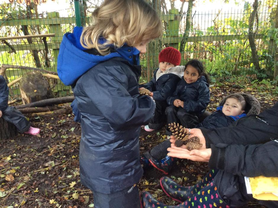 Counting out 3 pine cones