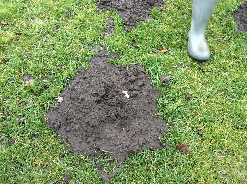 We have a very busy mole living on the field.