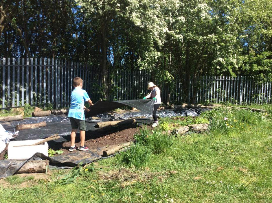 Bog garden prep.