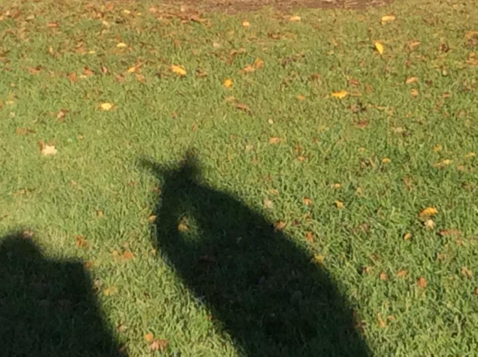 Shadow figures
