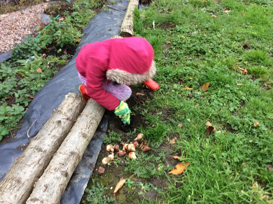 Siting and digging in the bulbs.