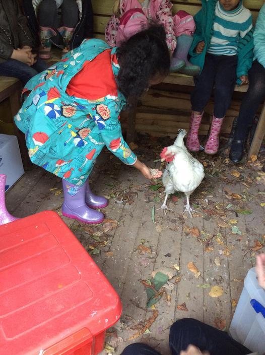 Jeff (the female) chicken.