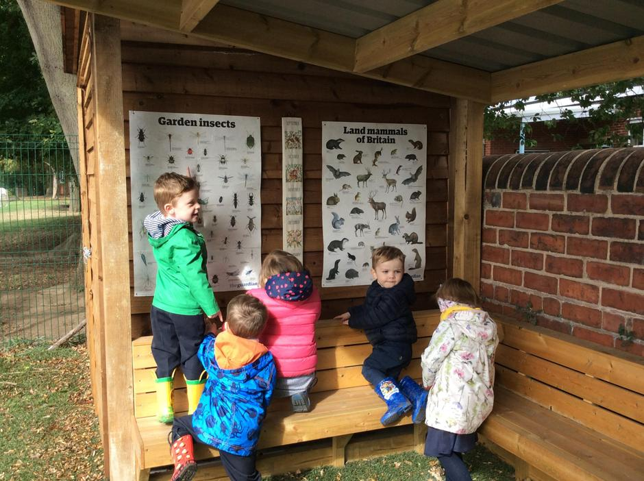 Recognising animals and plants on the posters.