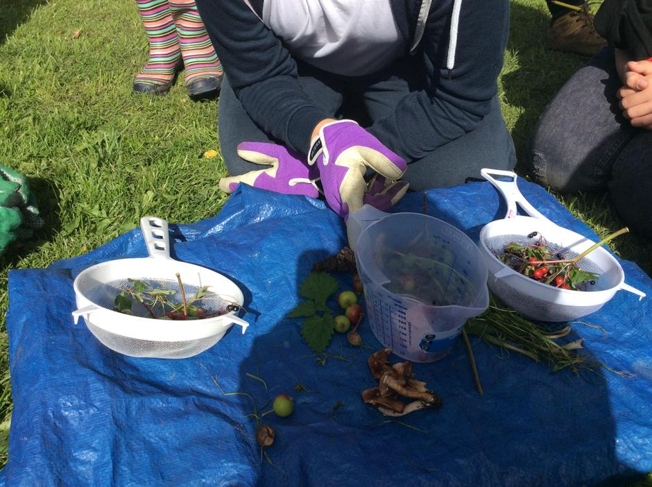 Wild food from in ourschool