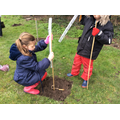 Planting our woodland.