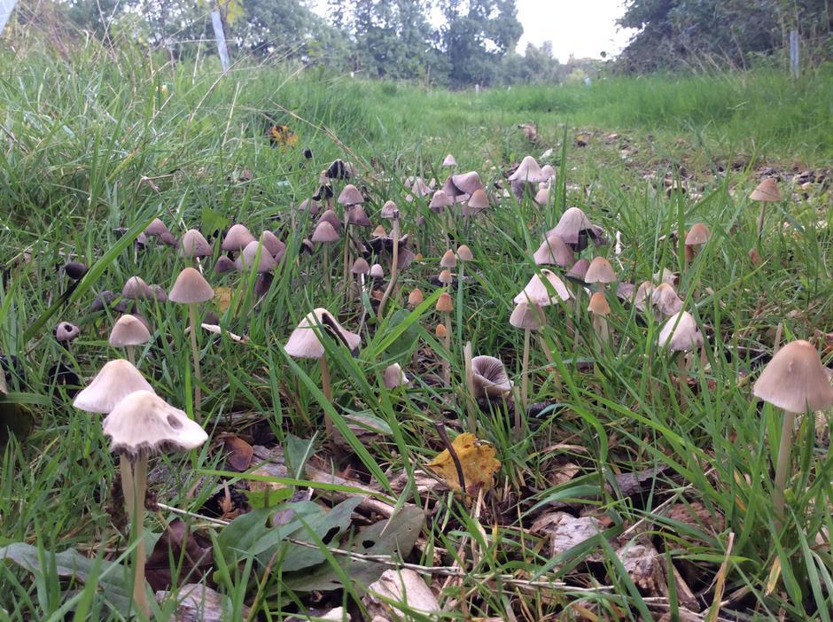 Wow! A mushroom forest.
