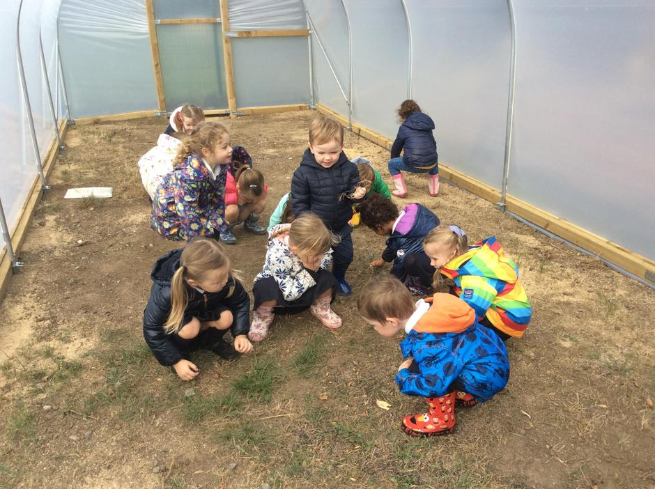 Newly planted 'seedlings' in our new polytunnel.