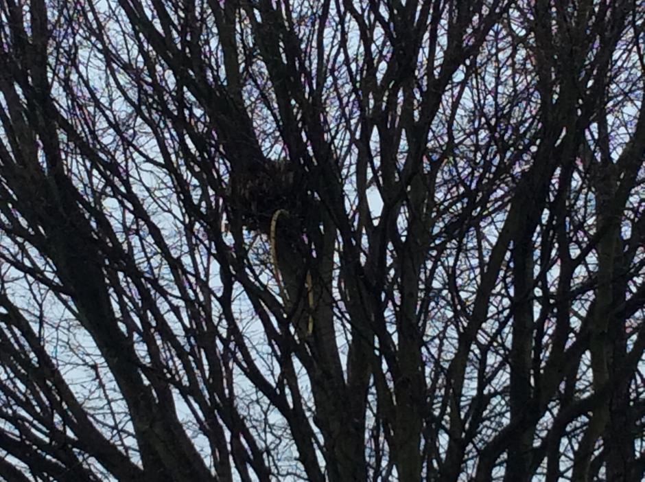 We saw lots of nests in the leafless trees.