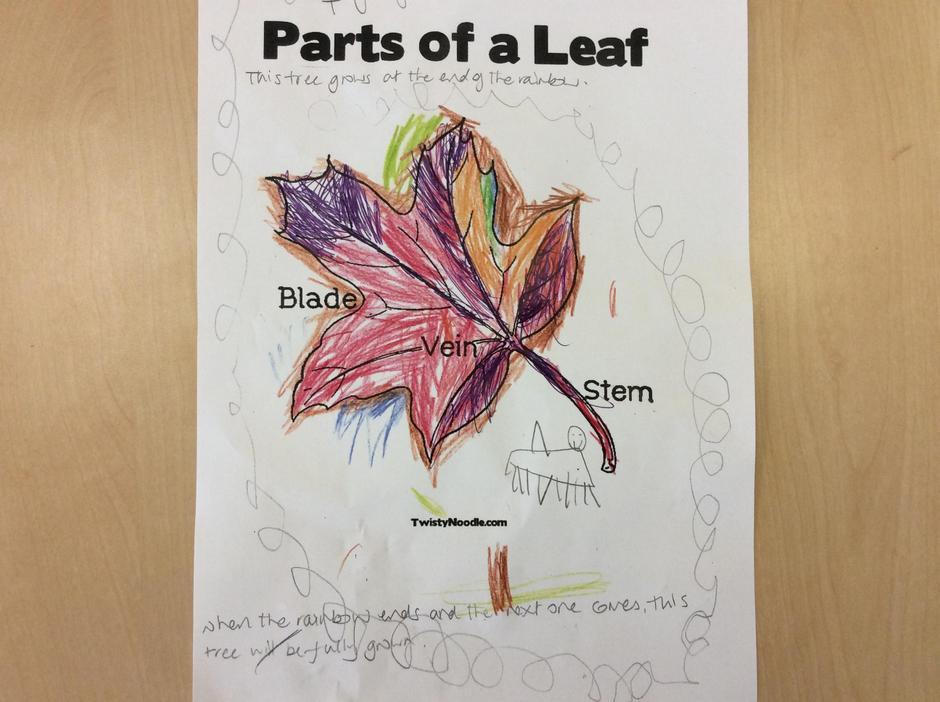 The Rainbow tree leaf.