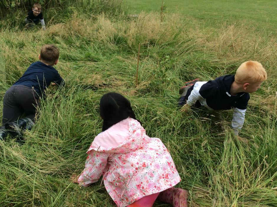 Prowling through the long grass.