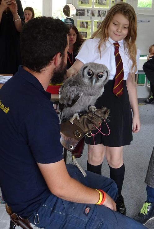 Hermione and Owl