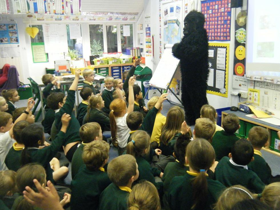 Gorilla in the classroom