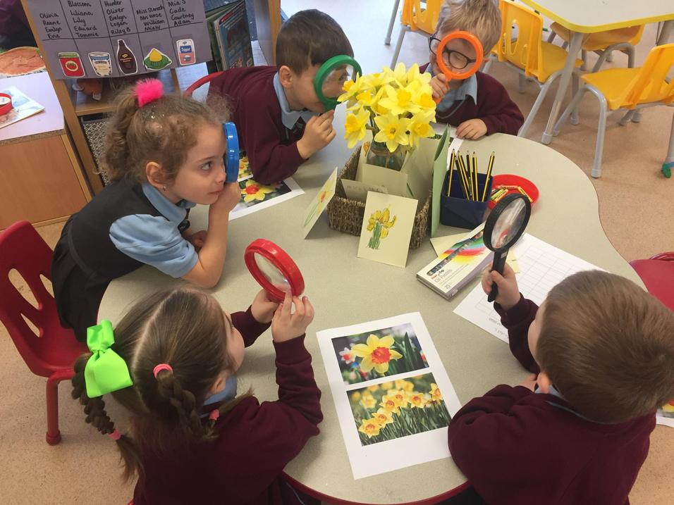 We enjoyed finding out about daffodils...