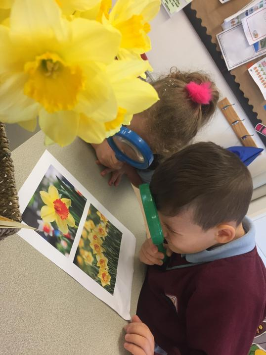 Naming the parts of the daffodil..