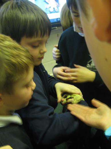 We learnt that it was a crested leopard gecko.