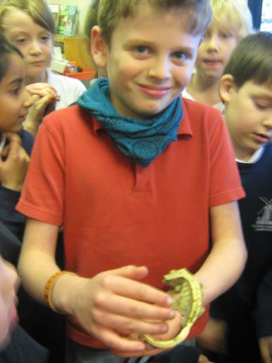 On Tuesday a lizard visited Birch class.