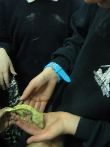 Some of us even got the chance to hold the lizard!