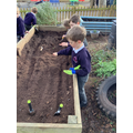 Planting our class seeds.