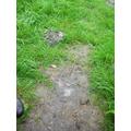 A footprint!