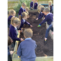 Turning over the soil; making holes for the seeds; practising using different garden tools