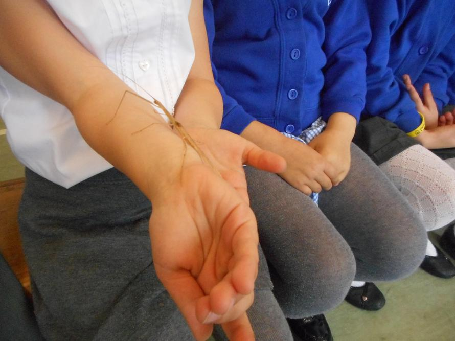Meeting a stick insect when the Bug Man visited