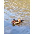 Finn - Y4 - Goldfinch