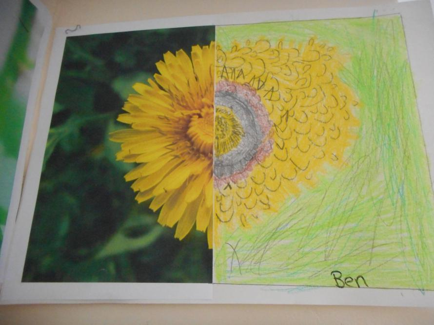 Close observational drawings of a flower