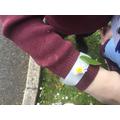 We enjoyed making nature wristbands!