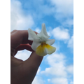 Eva's beautiful flower with a blue sky background