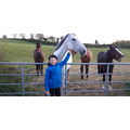 Oisin and his laughing horses