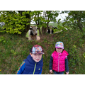 The cows are photo bombing Conor and Emily