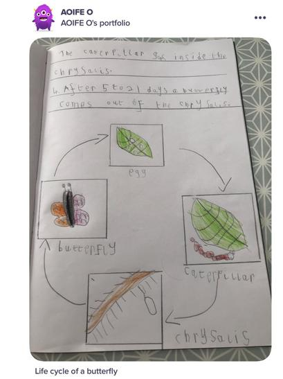 Aoife's Butterfly Lifecycle