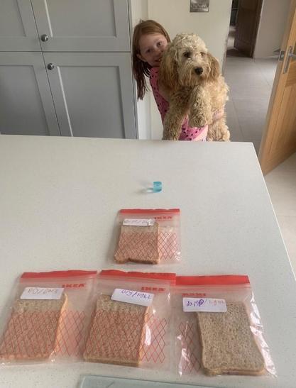 Abbie's Bread Investigation