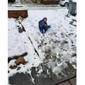 Jay in the Snow