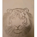 Daniel's Art